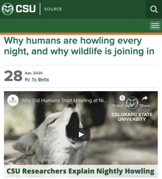 screenshot of wolf video