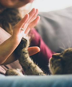 person-giving-high-five-to-grey-cat-38867sm